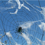 Spider web and spider